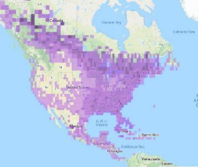 Sightings of Yellow-bellied Sapsucker as reported on eBird